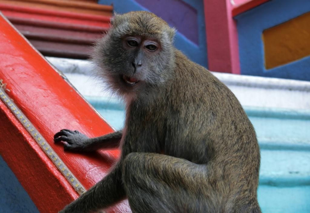 バトゥ洞窟の階段にいる猿