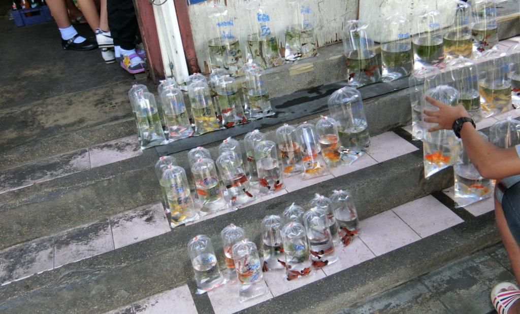 Mo Chitの問屋通りで売られていた観賞魚